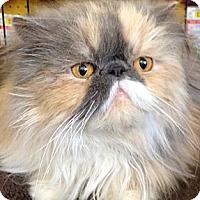 Adopt A Pet :: Nunu - Beverly Hills, CA