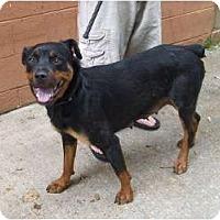 Adopt A Pet :: Daphne - Douglasville, GA
