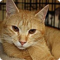 Adopt A Pet :: Sam (PP) - Little Falls, NJ