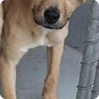 Adopt A Pet :: KAMI- PENDING ADOPTION!! - Birmingham, MI