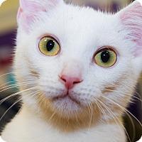 Adopt A Pet :: Andy - Irvine, CA