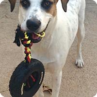 Adopt A Pet :: Jenny - Plano, TX