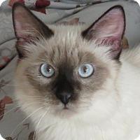 Adopt A Pet :: Minky - Davis, CA
