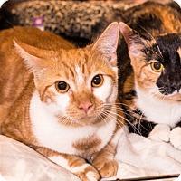 Adopt A Pet :: Ruby & Jill, Sweetie-pie Sisters - Brooklyn, NY