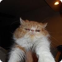 Adopt A Pet :: Jamie - Columbus, OH