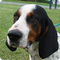 Adopt A Pet :: Bingham - Erwin, TN