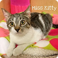 Adopt A Pet :: Miss Kitty - Foothill Ranch, CA