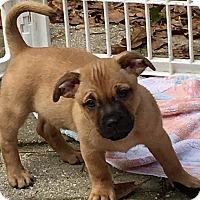 Adopt A Pet :: Francis - Gainesville, FL