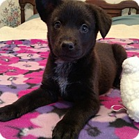 Adopt A Pet :: Tootsie - Marietta, GA