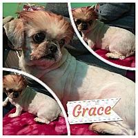 Adopt A Pet :: Selna - LAKEWOOD, CA