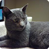 Adopt A Pet :: Slate - Bridgeton, MO