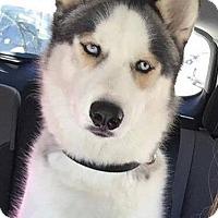 Adopt A Pet :: Logan - Matawan, NJ