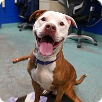 Adopt A Pet :: TYSON - New York, NY