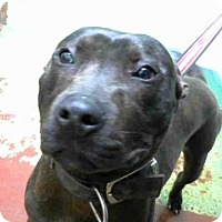 Adopt A Pet :: VINO - Atlanta, GA
