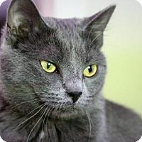 Adopt A Pet :: Geisha - Asheville, NC