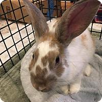 Adopt A Pet :: Romily (was Bellamae) - lake elsinore, CA