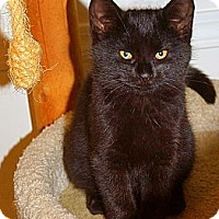 Adopt A Pet :: Cinder - Victor, NY
