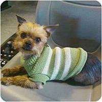 Adopt A Pet :: Peyton - Crestwood, KY