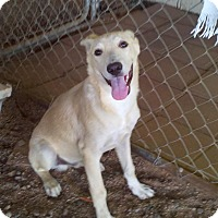 Adopt A Pet :: Yuma (located in Mesa AZ) - Chandler, AZ