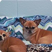 Adopt A Pet :: Lola - Muskegon, MI