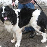 Adopt A Pet :: WELLINGTON - Sudbury, MA