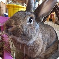 Adopt A Pet :: Felicity - Foster, RI