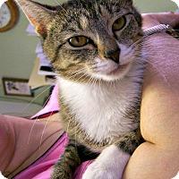 Adopt A Pet :: Merry - Toledo, OH