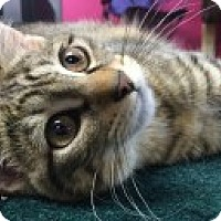 Adopt A Pet :: Suzanne - McHenry, IL