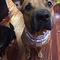 Adopt A Pet :: Rocky E - Manhattan, NY