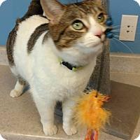 Adopt A Pet :: Rudy - Brookings, SD