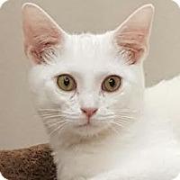 Adopt A Pet :: Bristol - Walworth, NY
