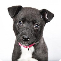 Adopt A Pet :: LUNA - Nashville, TN