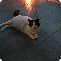 Adopt A Pet :: Emma - Swansea, MA