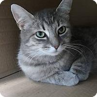 Adopt A Pet :: Mia - Austintown, OH