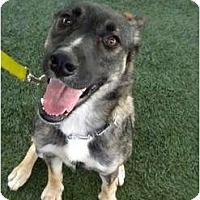 Adopt A Pet :: Thelma - Mission Viejo, CA