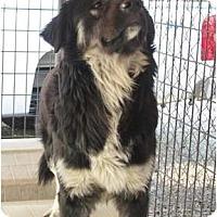 Adopt A Pet :: Bosco - Alexandria, VA
