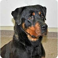 Adopt A Pet :: Jasmine - Port Washington, NY