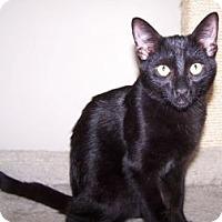 Adopt A Pet :: K-Piper3-Doobie - Colorado Springs, CO