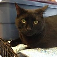 Adopt A Pet :: Dougie - Vancouver, BC