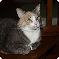 Adopt A Pet :: Bindi (LE) - Little Falls, NJ