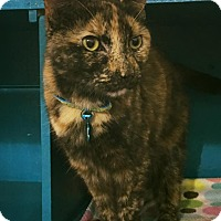 Adopt A Pet :: Phaedra - Powell, OH