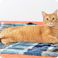 Adopt A Pet :: Colby - St. Louis, MO