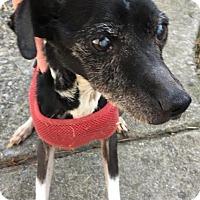 Adopt A Pet :: Blacker (courtesy post)(AL) - Wilmington, MA
