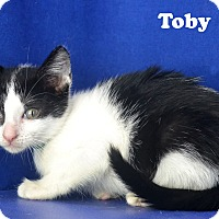Adopt A Pet :: Toby - Carencro, LA
