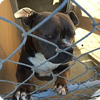 Adopt A Pet :: Alex - Huntington Beach, CA
