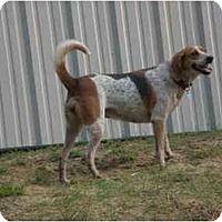 Adopt A Pet :: Tickle - Franklin, VA