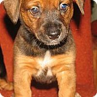 Adopt A Pet :: Rob - Hancock, MI