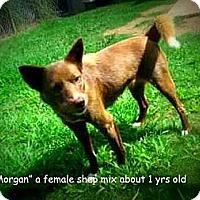 Adopt A Pet :: Morgan - Gadsden, AL
