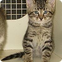 Adopt A Pet :: Gremlin - Dallas, TX