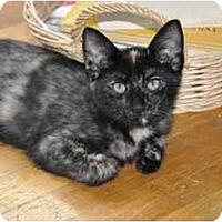 Adopt A Pet :: Pikachu - Washington Terrace, UT
